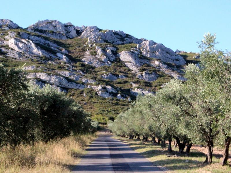 sur les chemins de l 39 olivier dans les baux de provence rfi blogs. Black Bedroom Furniture Sets. Home Design Ideas